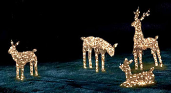 Lights at Pine Forest Vidor family night